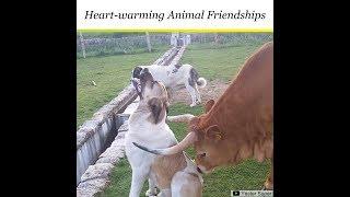 Odd Couples - Adorable Animal Friendships