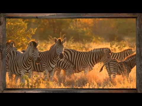 Zebra - African Sky