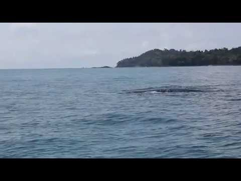 Isla Palenque, Panama | Whale Watching in the Gulf of Chiriqui | The Resort at Isla Palenque