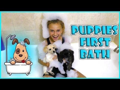 PUPPIES FIRST BATH | KIDS TEACH MOM POKEMON GO | We Are The Davises