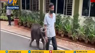 Watch: Cute bond between baby Elephant and trainer wins in..