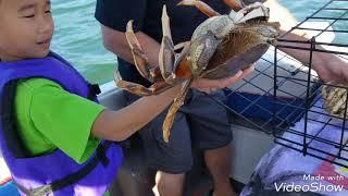 Đi câu cua ở mỹ ( crabbing) p 1
