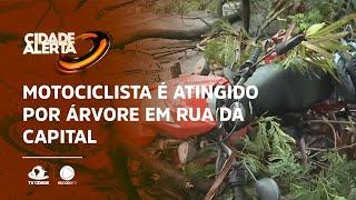Motociclista é atingido por árvore em rua da capital