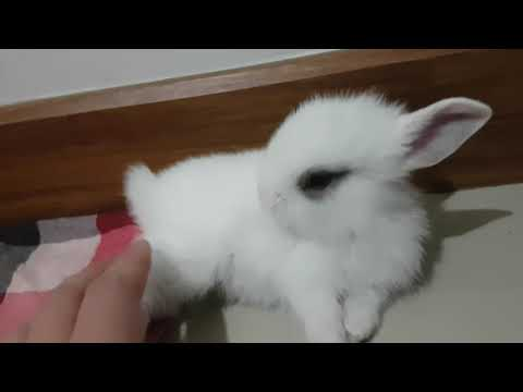 발라당 자빠져 있다가 그루밍 해주는 착한 토끼