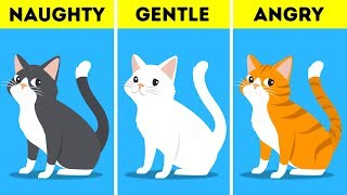 What Your Pet's Color Says About Their Personality