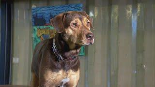 How Malnourished Dog Became Star of 'A Dog's Way Home'