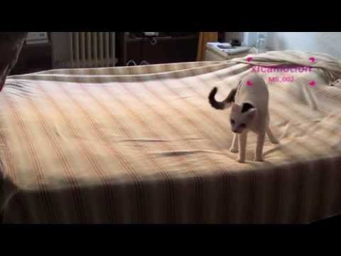 Making the bed with a cat
