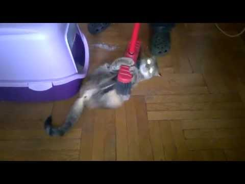 Kitten's fighting a broom