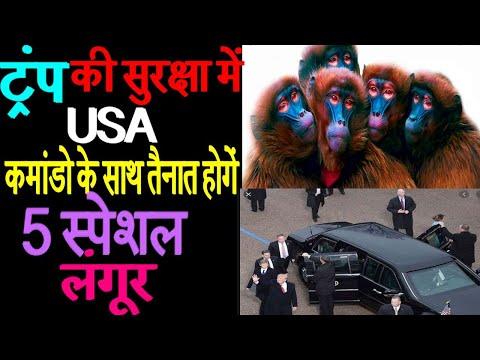 Prior to Donald Trump's Taj Mahal visit in Agra, 5 langurs deployed