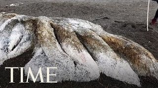 A Mysterious Furry 'Sea Monster' Has Washed Up On A Russian Beach   TIME