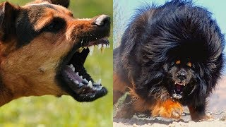 MOST DANGEROUS Dogs On Earth!