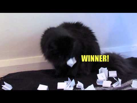 Captain Feline Launch Party Giveaway Draw...