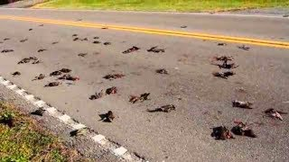 MYSTERIOUS Animals That FELL From The Sky!