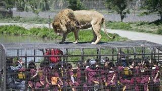 LION SAFARI AT VENKATESHWARA ZOO PARK TIRUPATI