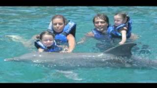 Famosos con delfines