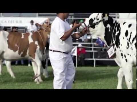 Agrovet Market en la II Feria Nacional Brown Swiss Holstein 2013 - Lima, Perú