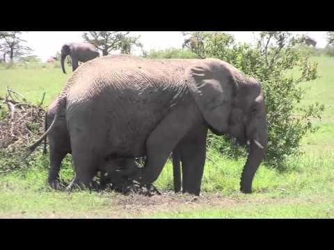 Naboisho Elephants Bathtime