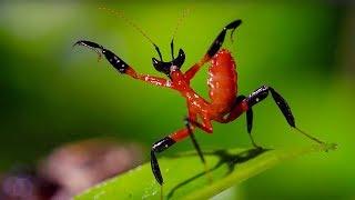 5 Поразительных животных-обманщиков