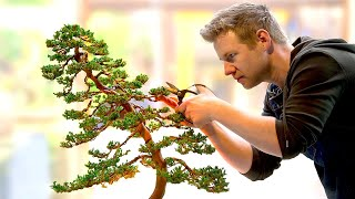 Learning the Ancient Art of Bonsai - in 1 Day