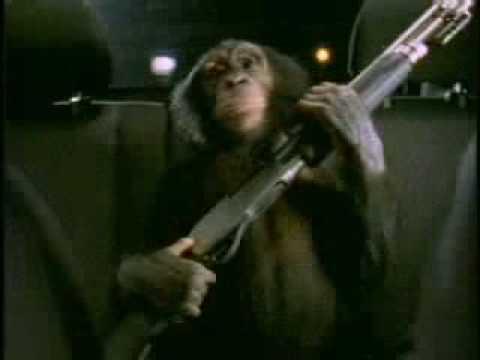 South american midget monkeys consider