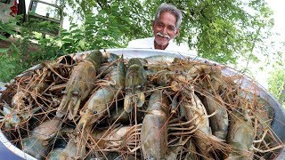 Big Shrimp Curry   Giant prawns Recipe   Yummy Prawns Recipe By Grandpa Kitchen