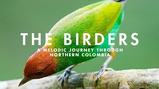 THE BIRDERS  | A Melodic Journey through Northern Colombia