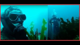 scuba diver terrified by a freediver