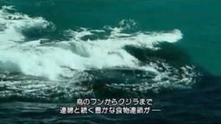 サメの戦場4