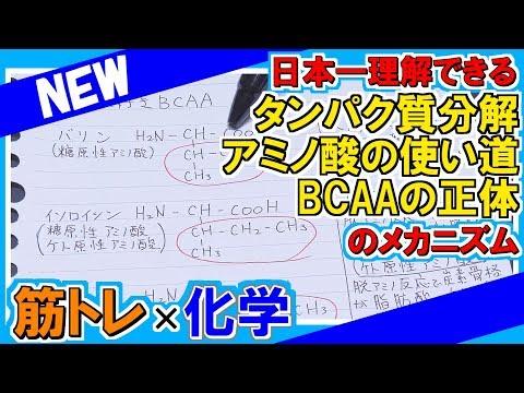 日本一理解できるタンパク質・アミノ酸・BCAAの話【タンパク質・プロテイン・アミノ酸・BCAA】