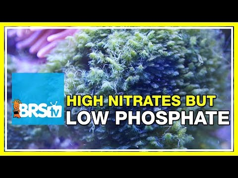 FAQ #42 Why are my nitrates high but phosphates low? | 52 FAQ