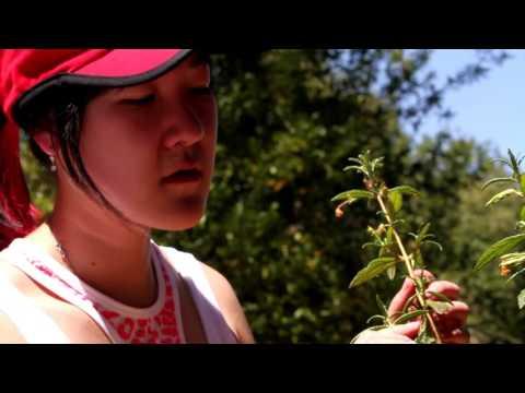 Jasper Ridge Biological Preserve: Stanford's Global Backyard