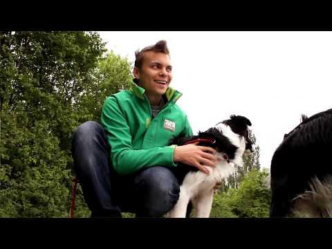 Anti-Giftköder-Training beim Hund Teil 1