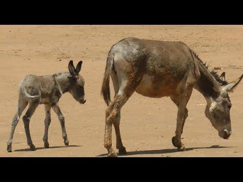 Hilfe für Esel in Tansania: WTG e.V. baut Gehege, die Esel-Leben retten