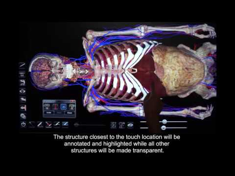 How to Use the Explorer Tools in Anatomage Table 5.0