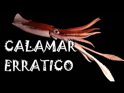 how to get the kraken in gta 5