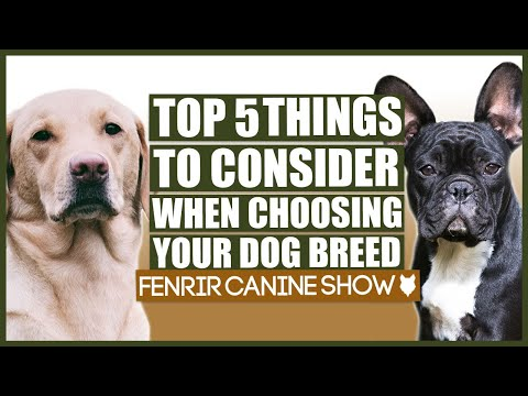 Top 5 Things To Consider BEFORE Choosing Your Dog Breed!