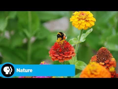 Nature: American Spring LIVE Trailer