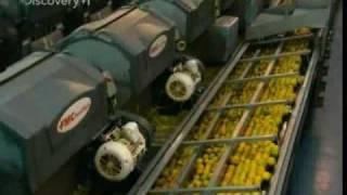 How Orange Juice Is Made