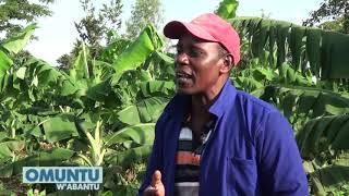 OMUNTU W'ABANTU : Tuli ne Muhammad Kakiika Ekitundu 2  AA