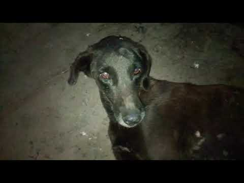 This Dog Needs Your Help....