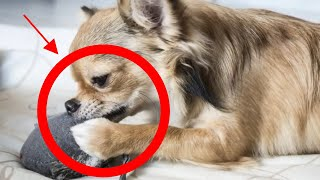 How To Stop A Dog From Chewing With 5 Easy Techniques
