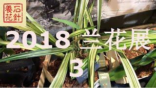 [石针养花]多伦多2018兰花展 中国兰 SOOS ORCHIDS SHOW 2018 - 3