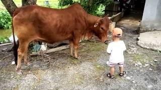 Cậu bé chăn bò