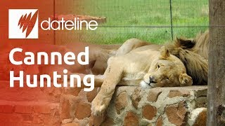 Canned Hunting: Killing for Trophies