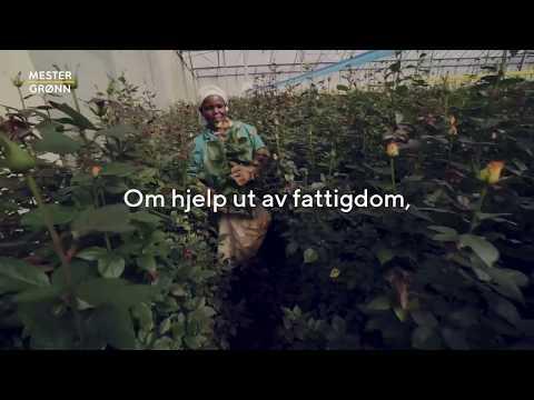 Vis omtanke og kjøp Fairtrade-merkede blomster