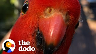 Red Parrot Brings Girlfriend Over To Meet The Woman He Visits Every Day | The Dodo Wild Hearts