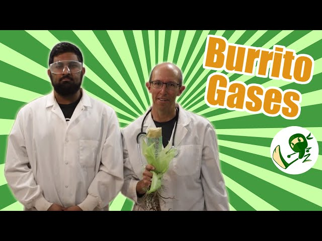 Burrito Gases: The Field of Beans