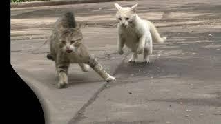 Top crazy cat fighting №1