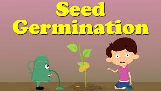 Seed Germination | It's AumSum Time