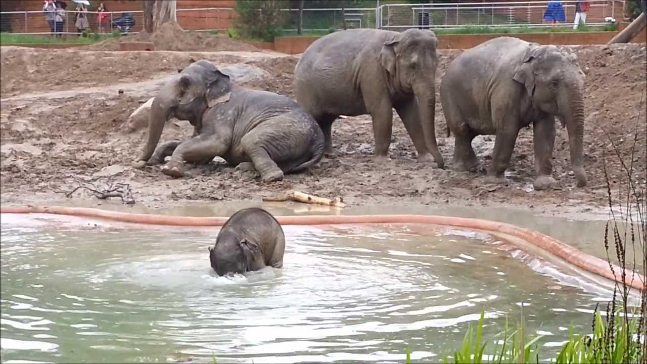 The Baby Elephant, playing in water May 2013 by Jonas ...